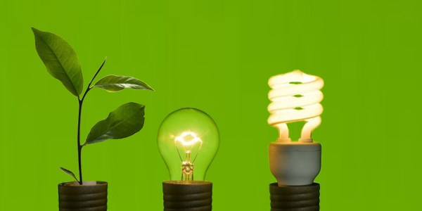3 Companies that Prove Environment and Business are Compatible
